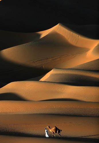 Camel Racing in the Desert: Pictures