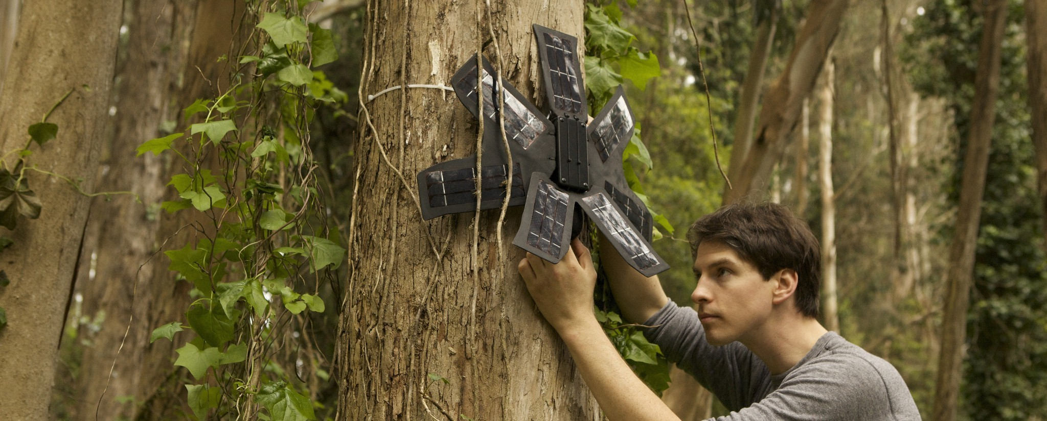 A Network of Recycled Phones Is Listening for Illegal Logging in the Rainforest - VICE