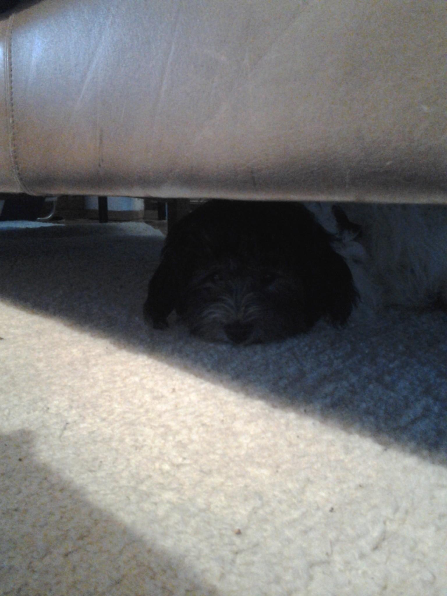 Total süs hund unter sofa oder sofa über hund :)