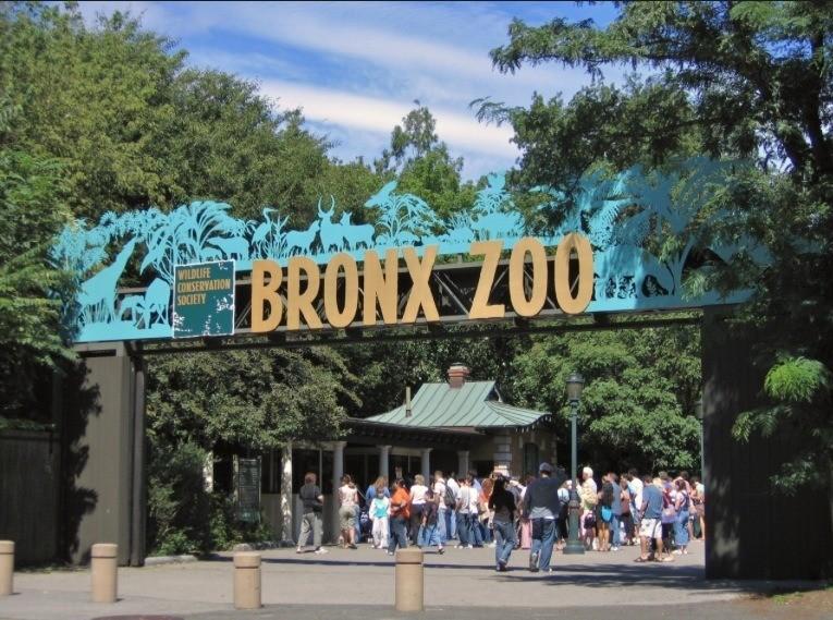 Este tip para viajar Es a la famos a ciudad de NY si usted piensa viajar con su familia NY es ideal ya que sus magníficos zoos como el BONX ZOO tiene un gran variedad de animales y diversion