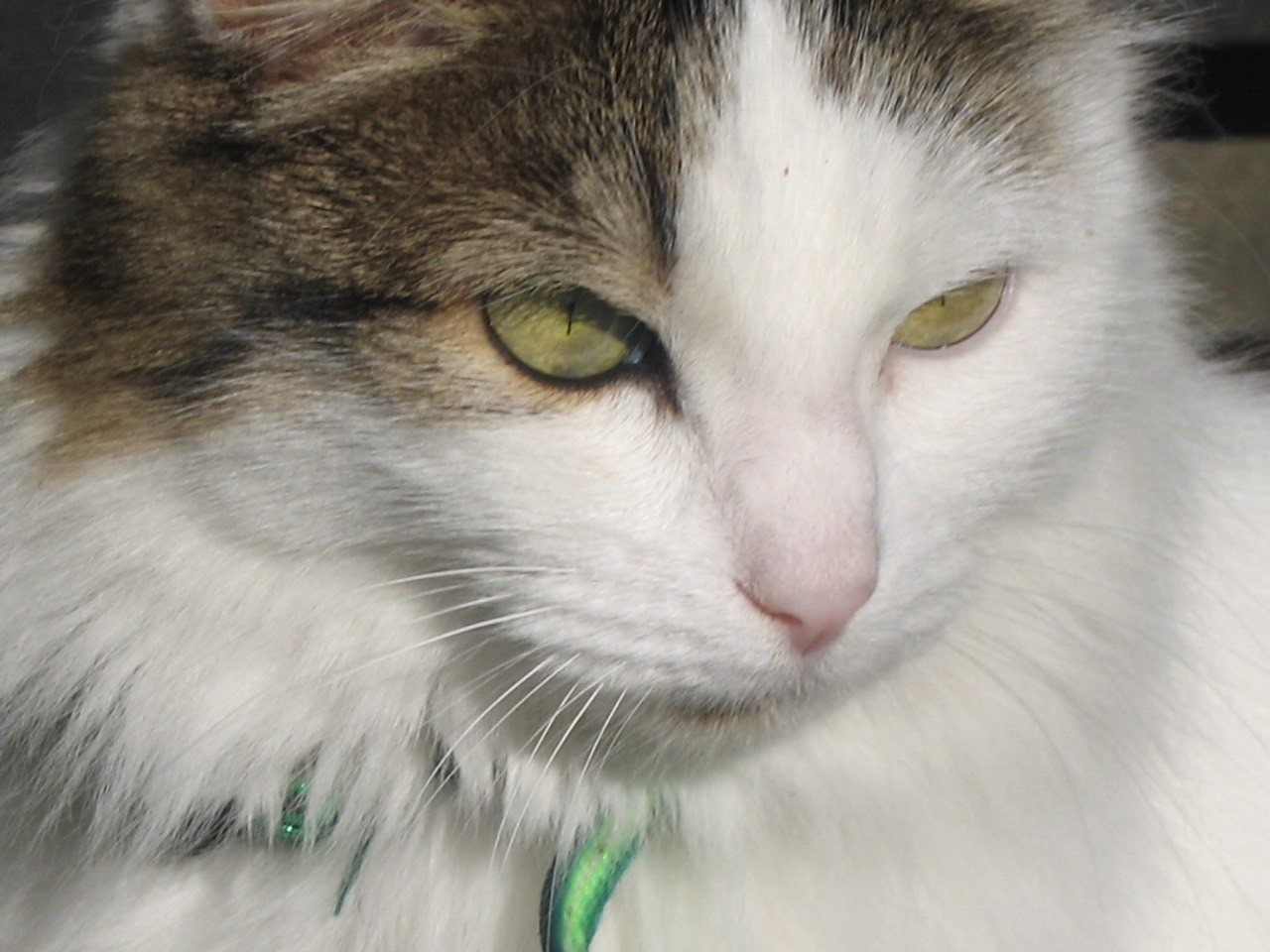 Mischa, our long lived and long loved cat, no longer with us.