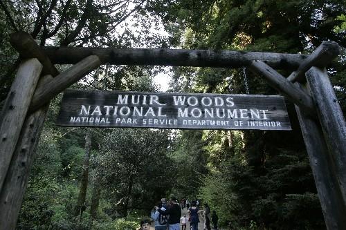 Redwood tree falls, kills hiker in California park