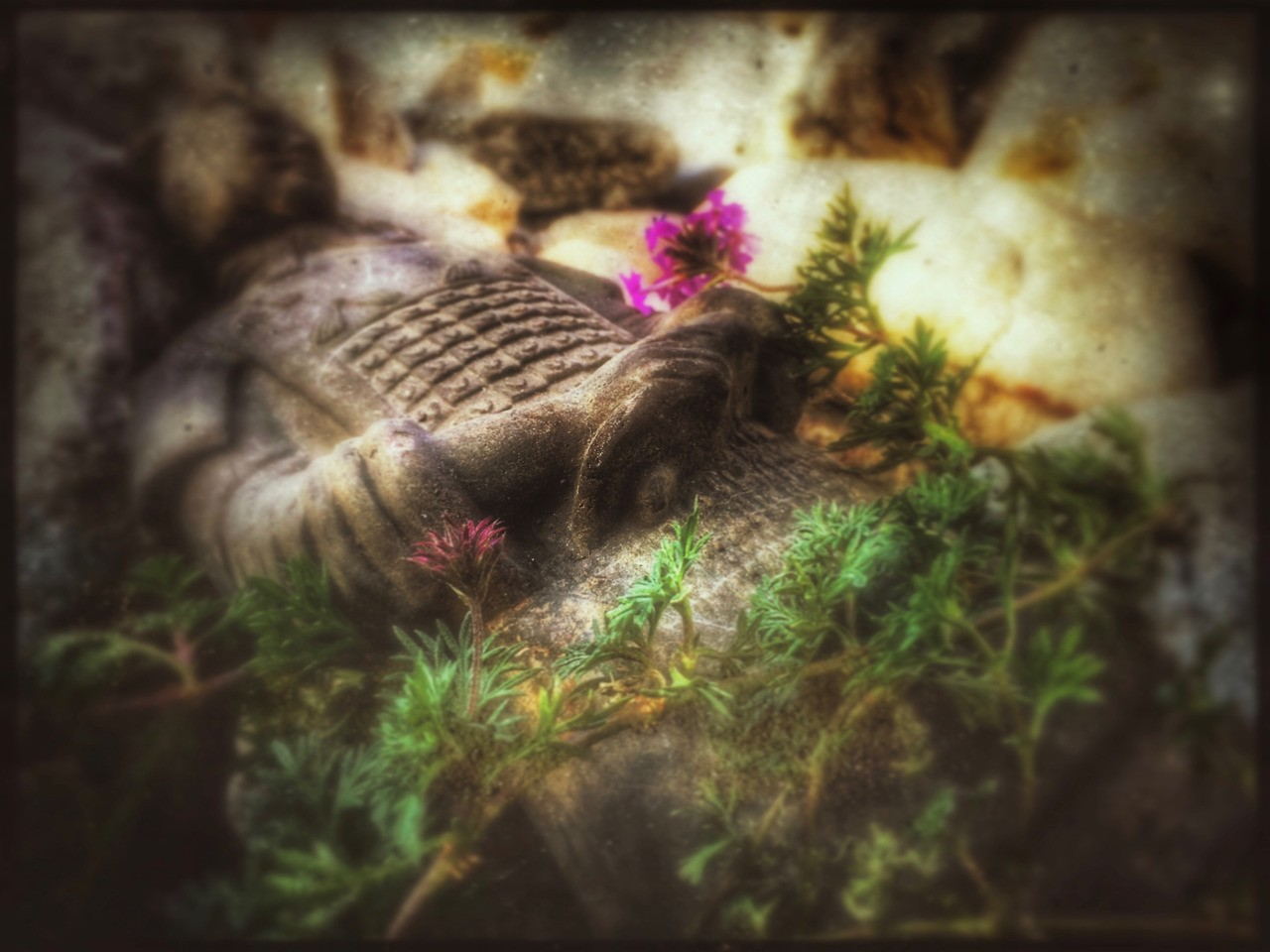 """As he tipped over, fell and broke his head off, I heard two things from behind me. My husband saying, """"At Least We Have The Other One In The Garage"""" and the dog snickering cause he was there when I broke that one last week. . . #backyard #terracottawarriors #yardart #verbena #rock #saturated #flowers #textures #apple #iphone #iphone6splus #iphonography #ipad #snapseed #hipstamatic #deserthotsprings"""