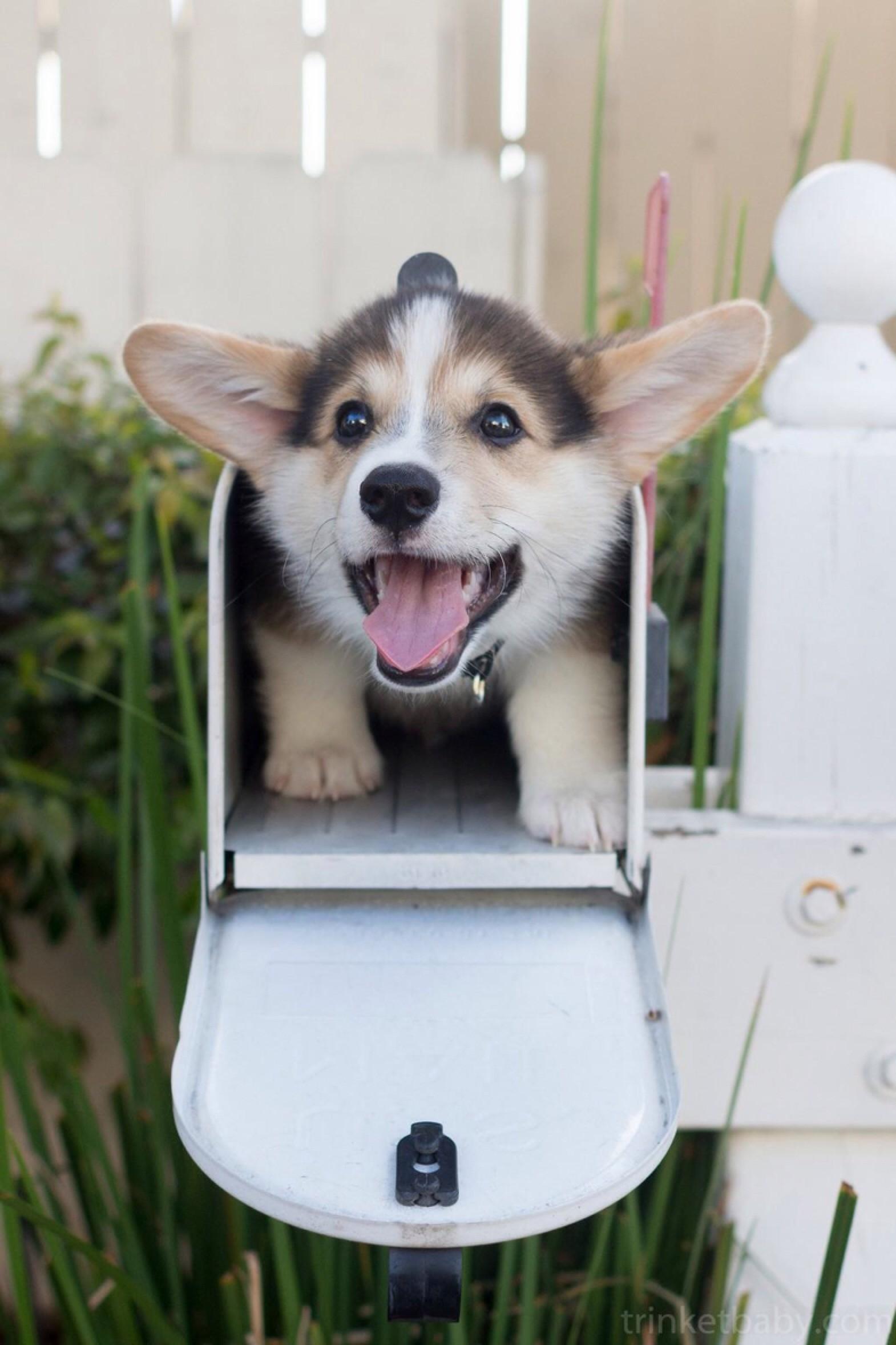 You got some mail! Jk. It's a puppy.