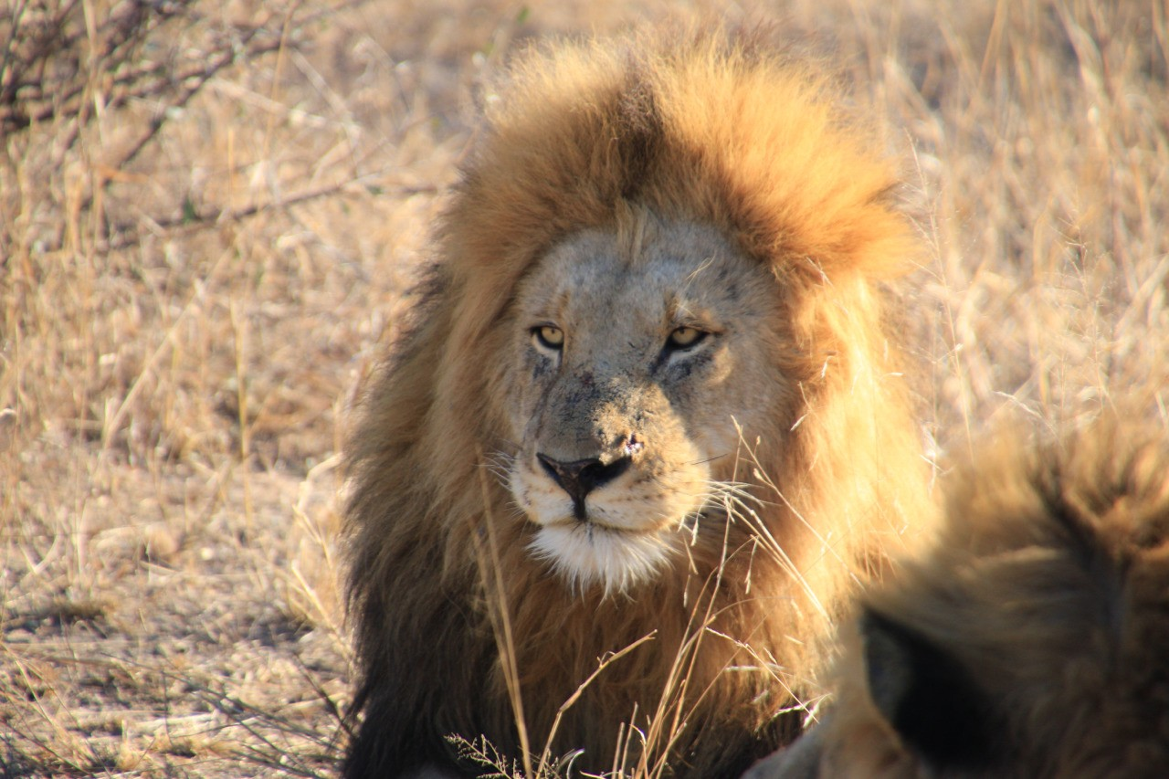 We had an amazing time at Elephant Plains Game Reserve and Kruger National Park. Lions, leopards, buffalo and Giraffes oh my.