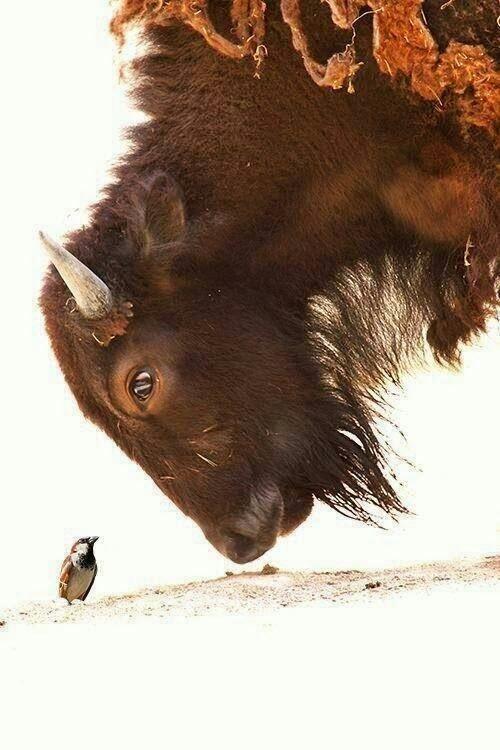 صور حيوانات - cover