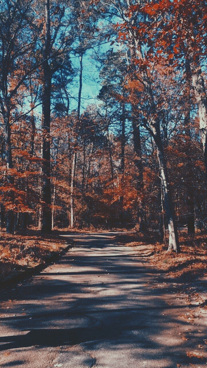 I like this picture because the trees look really nice. This is in North Carolina.- Vianey, 15