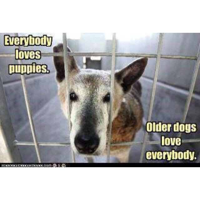 CURSE THE PEOPLE WHO WOULD CONDEM A DOG TO THE LIFE OF THIS AND THEN HAVE IT EUTHANIZED