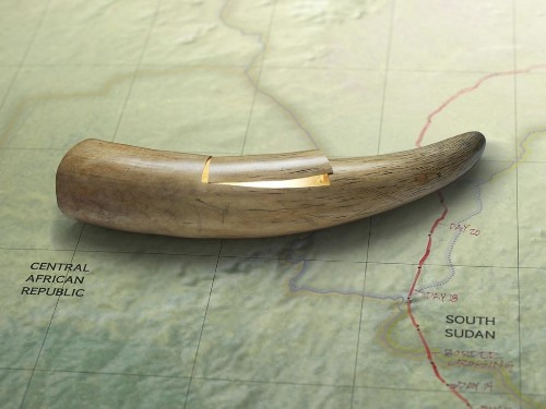 Tracking the Illegal Tusk Trade