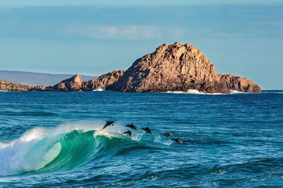 Dolphins at Margret River