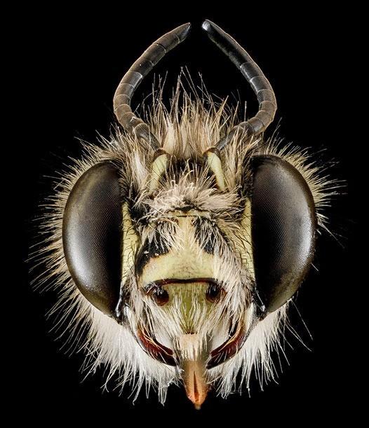 A Moth Prophet cover image