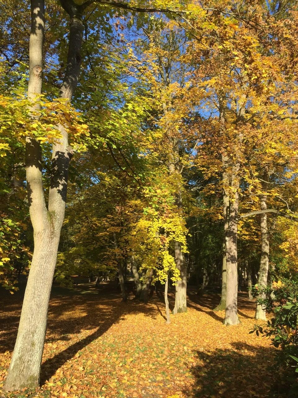 Herbstlich gefärbter Park