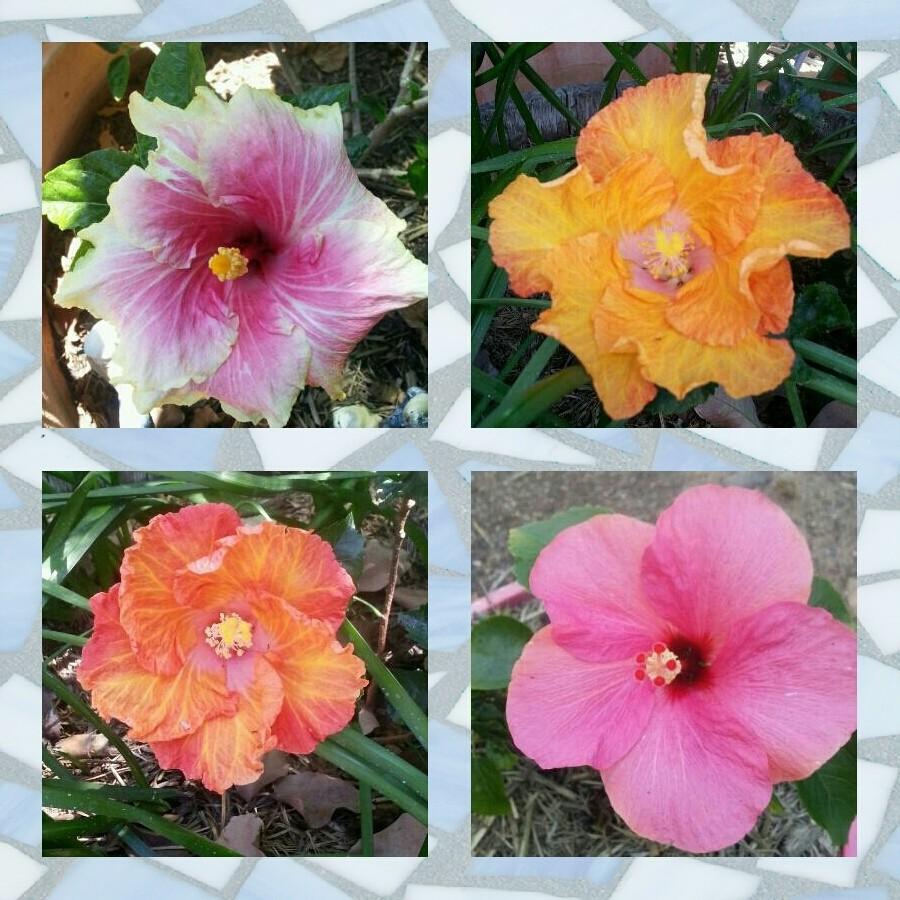 Flowers - Magazine cover