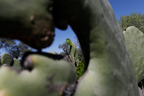 In Mexico's cradle of corn, climate change leaves its mark