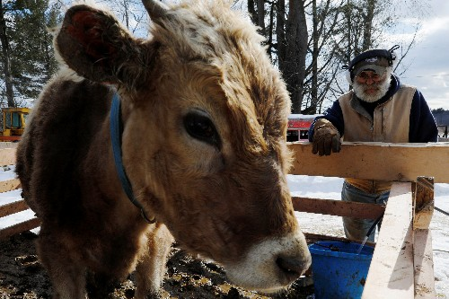 The curious case of tainted milk from a Maine dairy farm