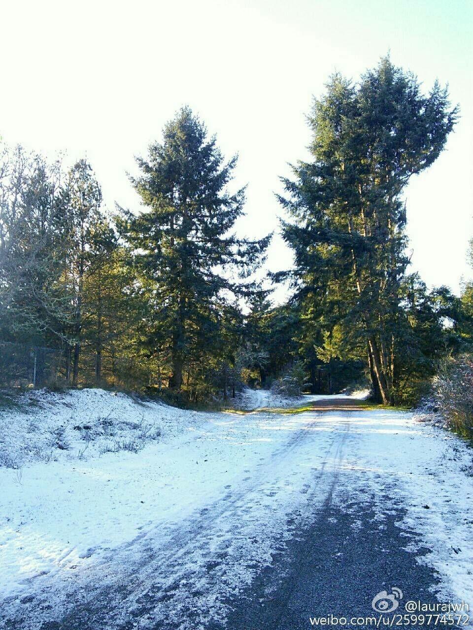 松·雪·澄净@Bright Transparency [遇见]一场雪夜后,这松木一尘不染地任阳光穿透,尤显挺拔向上的姿容....
