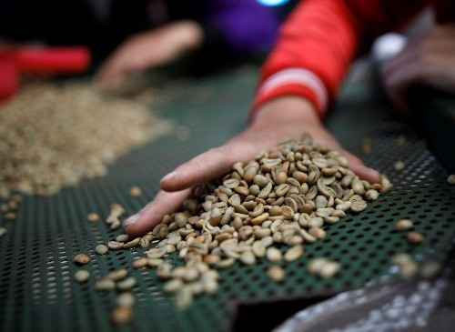 Asia Coffee: Vietnam prices little changed from last week; brisk trade in Indonesia