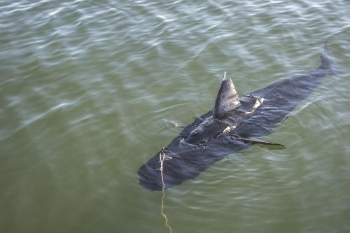 Navy's Robot Tuna Goes For A Swim