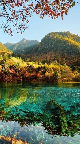 风景 cover image