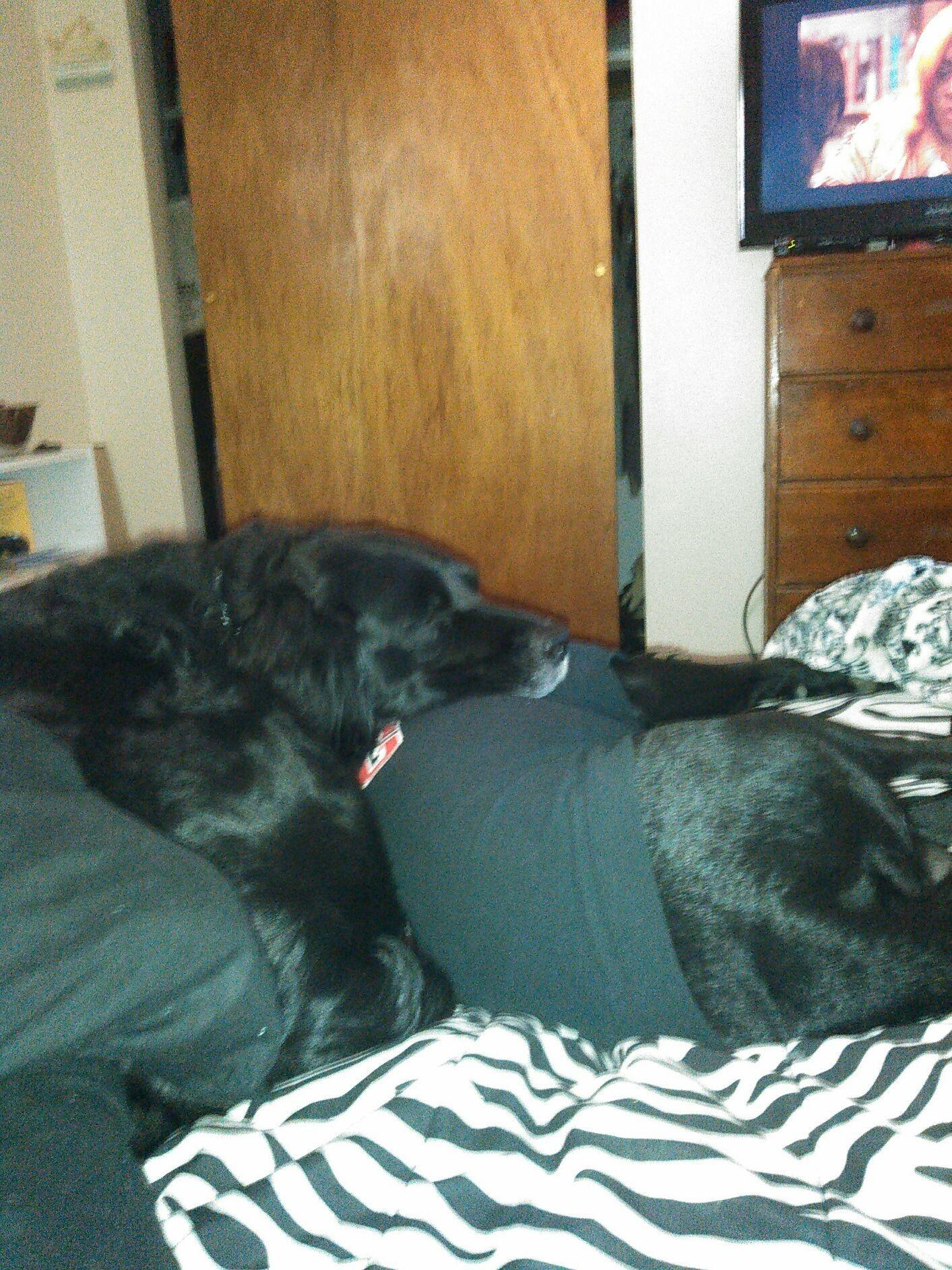 Awe, what good pups!