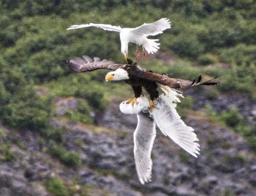 THE SHOT: Photographing the Food Chain in Alaska