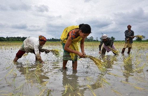 India's monsoon rains below average levels for a fourth week