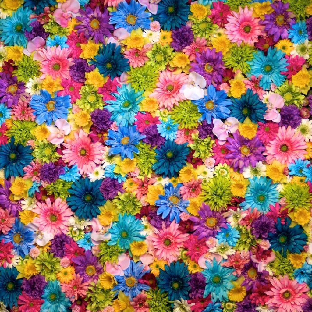 Flowerpower - Magazine cover