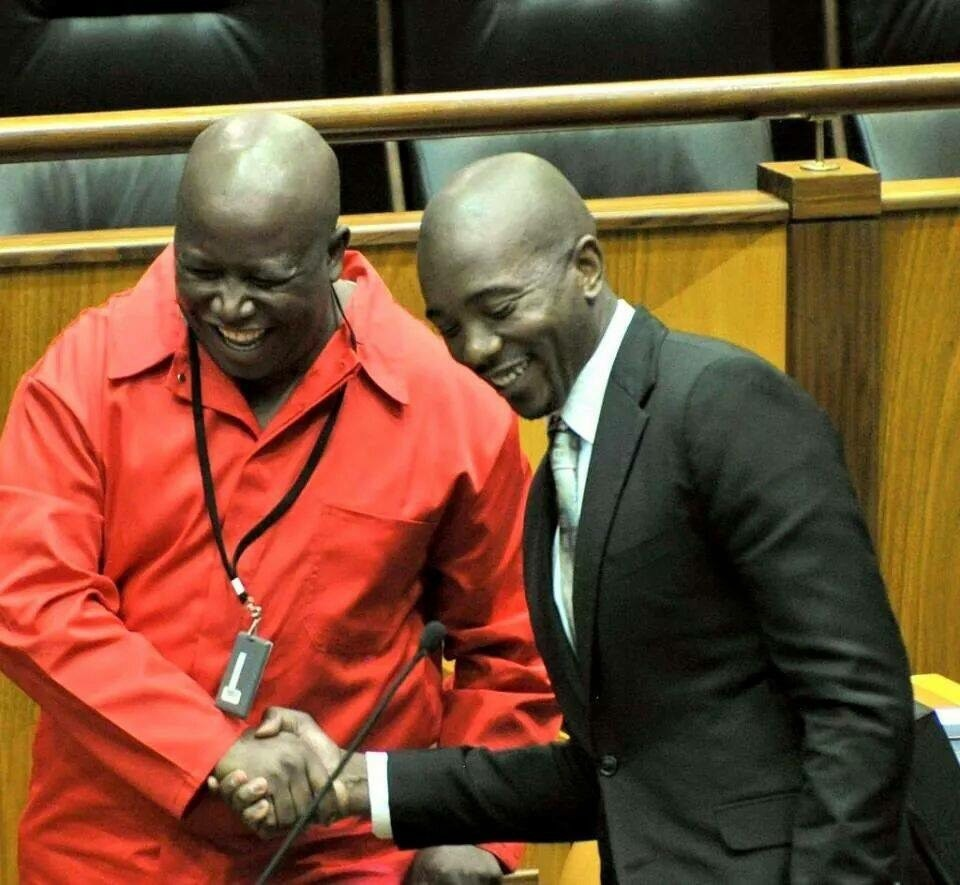 Young blood in Parly