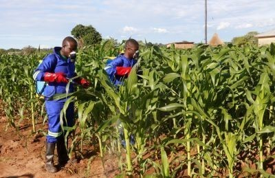 Uganda declares armyworm outbreak as pest spreads in the region