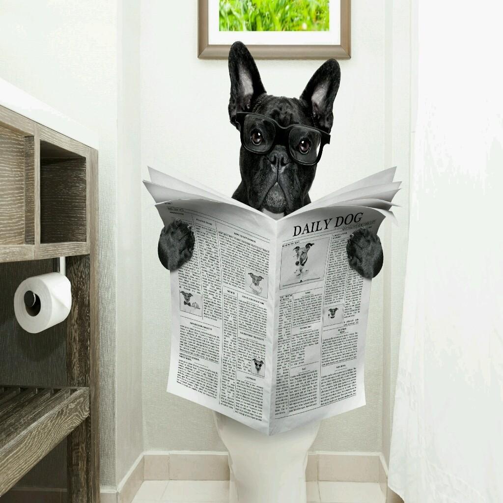 Toilet News - обложка