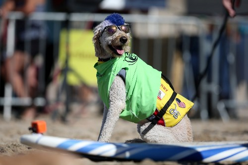 Surf's Up! 8th Annual Surf Dog Competition: Pictures