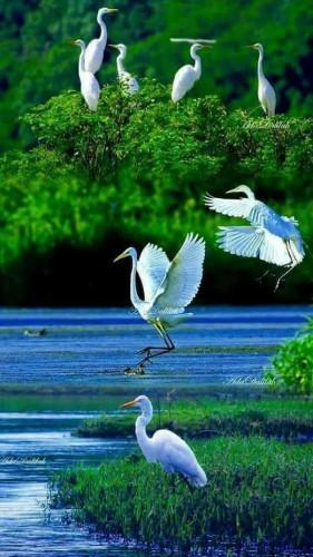 Nature..