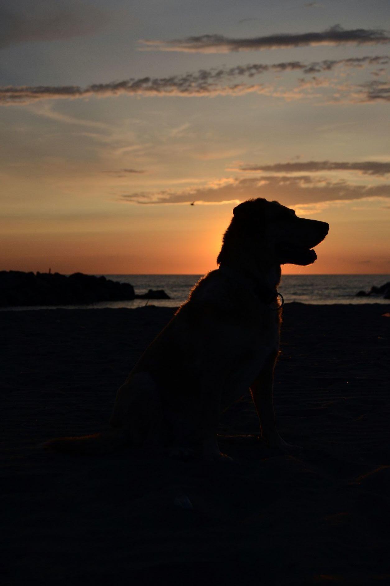 Aspettando il tramonto con un vero amico...