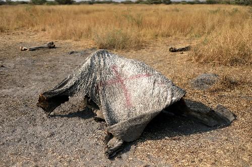 More than 100 elephants die in Botswana in suspected anthrax outbreak