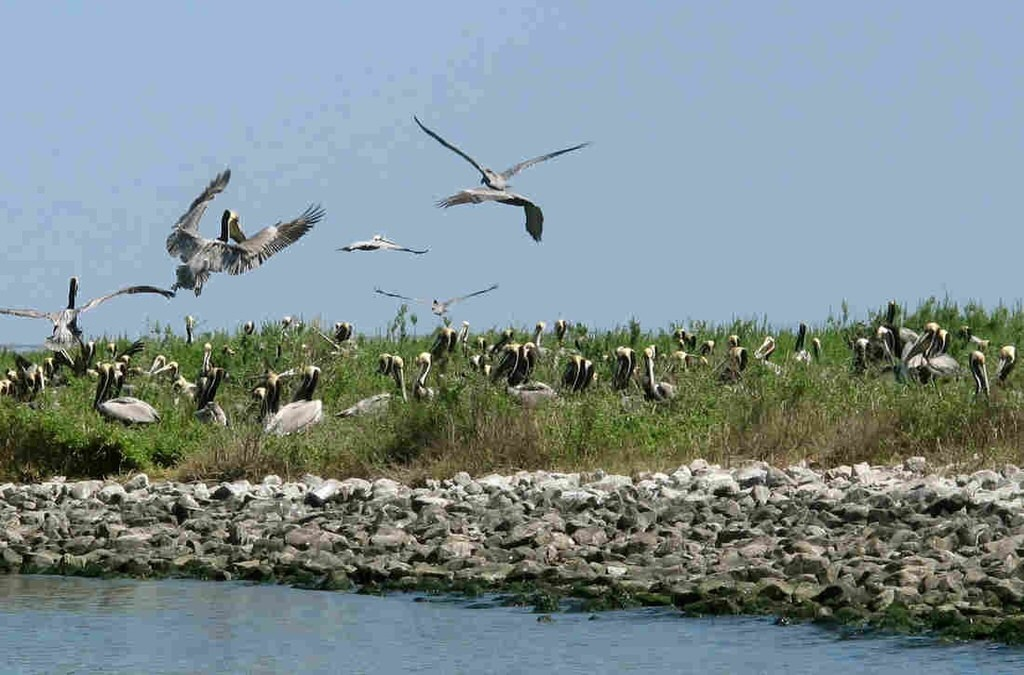 5 Years After BP Oil Spill, Effects Linger And Recovery Is Slow