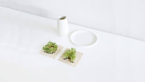 Gifts for people that love herbs
