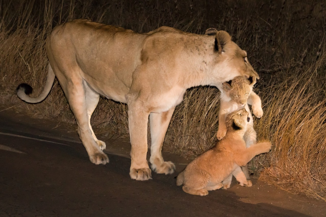 Ma put my brother down. Kruger National Park South Africa.