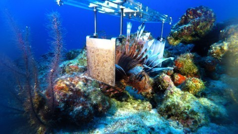 Killer robots: The latest weapon in the futile fight to destroy the invasive lionfish