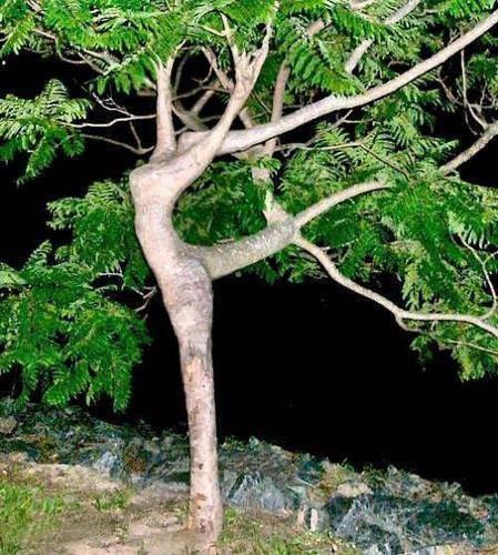 Tree gal