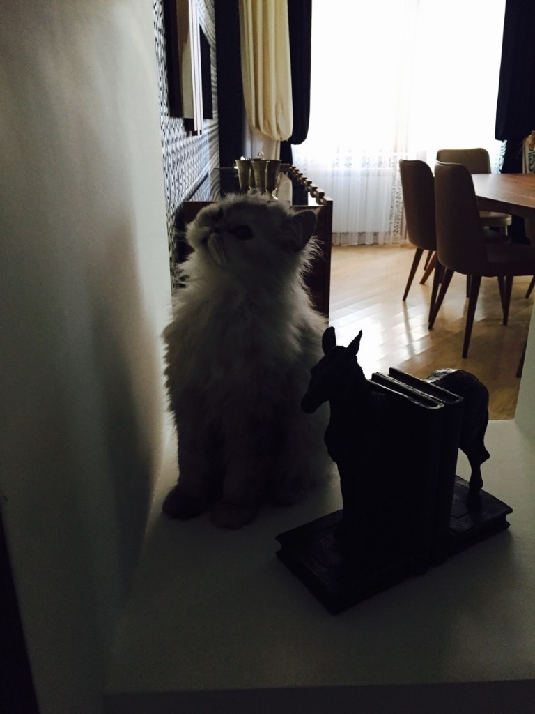 my cat - cover