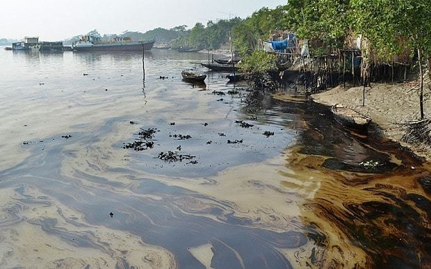 Fears for rare wildlife as oil 'catastrophe' strikes Sundarbans