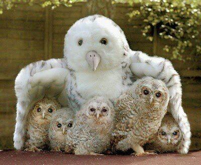 A coruja estava protegendo os seus filhotes!