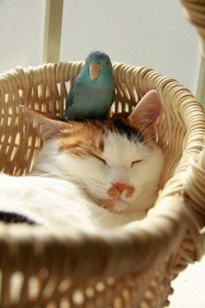 Leise Kumpel is müde