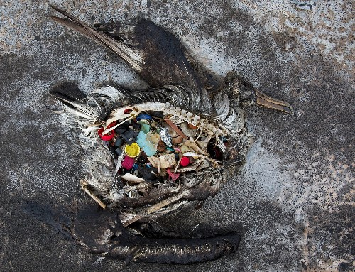 The Great Pacific Garbage Patch Isn't What You Think it Is