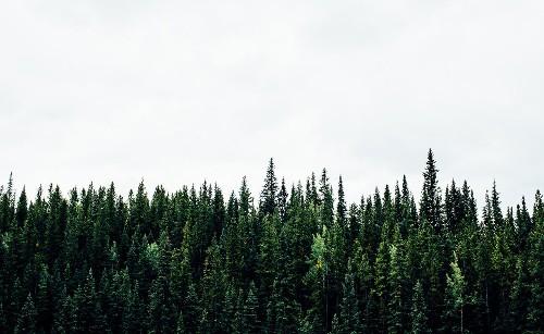Editori su Flipboard: ecco come sfruttare i vostri contenuti evergreen