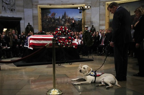 Good boy: Sully the service dog visits Bush's casket