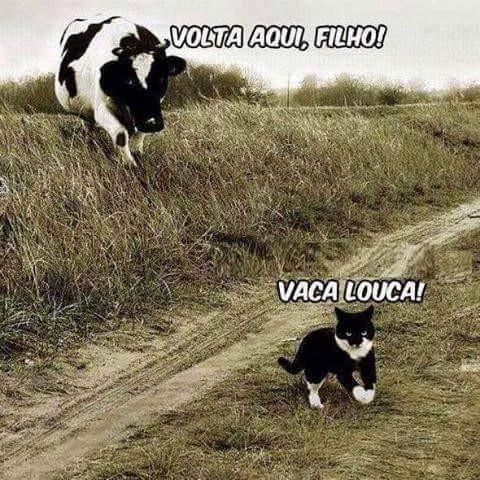 Vaca Louca.