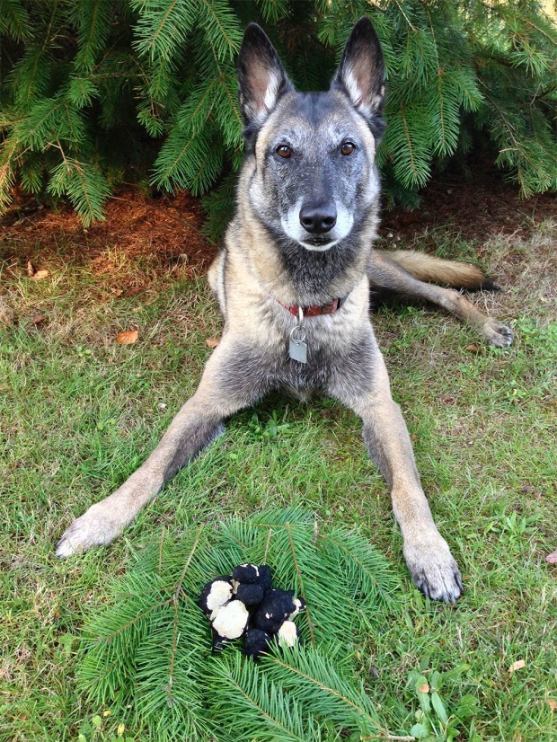 The True Story of How a Dog Became a Truffle Hunter Thanks to Magic Mushrooms