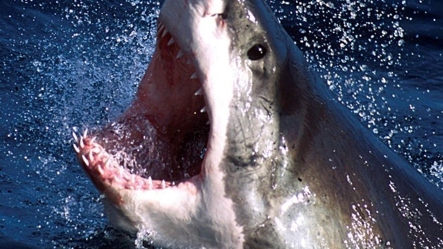 Terrifying drone video shows great white shark stalking surfers