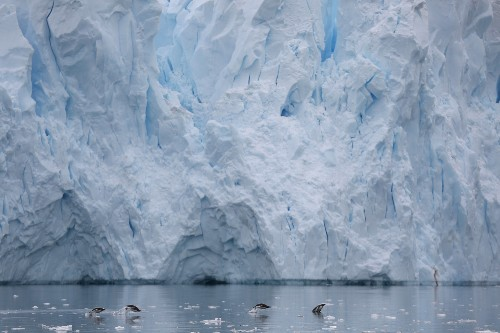 The Beauty of Antarctica in Pictures